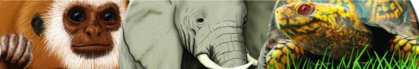 Illustrations_bar_Animal-Strip1