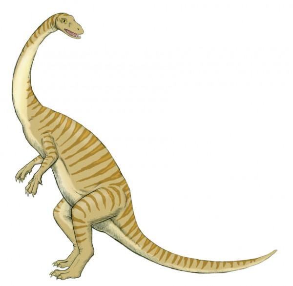 Anchisaurus3