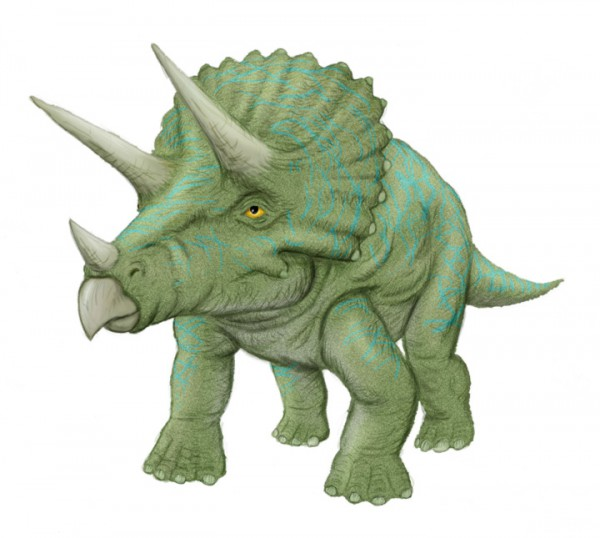 Triceratops-Color2